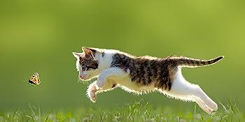 Multi VITAMINE für Katzen Stärkung Immunsystem Stoffwechsel glänzendes Fell Herz Niere Leber Galle