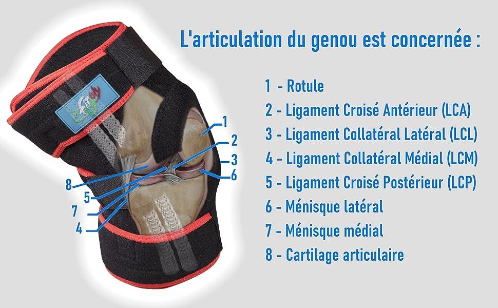 Images de la genouillère orthopédique FitFitaly confrontée à l'anatomie di genou