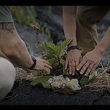 Planting Noni