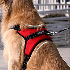 RED HARNAIS CHIEN L