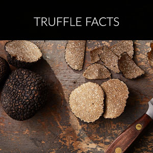 Truffle Facts
