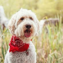 paisley bandana, kerchief, cooling bandanas, hair bandanas, cool bandanas, dog bandanas, bandannas