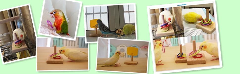 Bird puzzle Toys