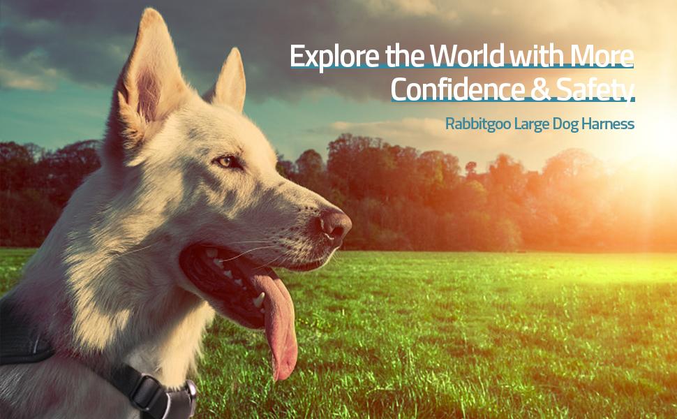 rabbitgoo large dog harness for training and walking