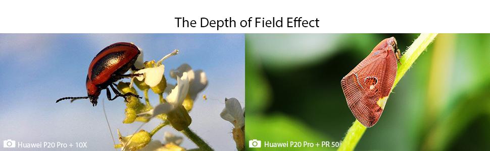 macro depth of field effect