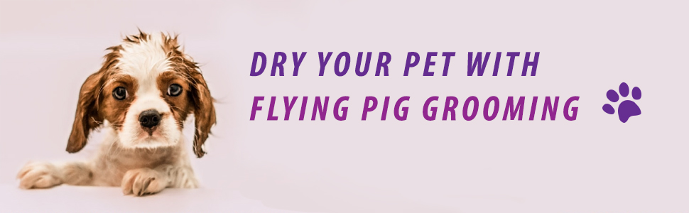 Dryer your dog pet with flying pig grooming