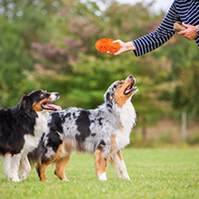 dog interactive toys for large dogs