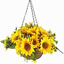 Sunflower Hanging flowers