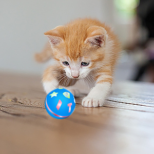 This smart toy for cat