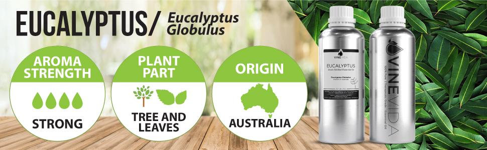Eucalyptus 32 Oz