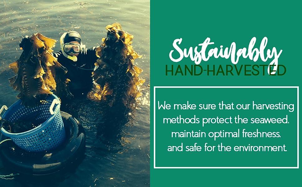 VitaminSea Organic Dulse Flakes Seaweed