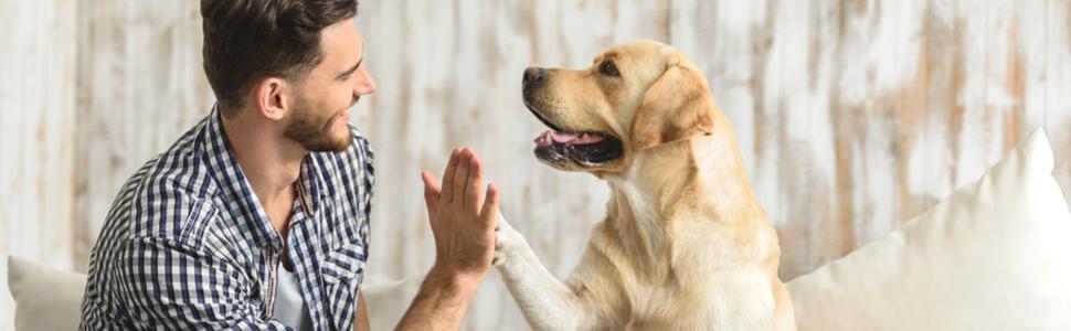 Brosse pour sous-laine, chiens, chats, brosse, toilettage, pelage, sous-laine, peigne pour chien, étrille.