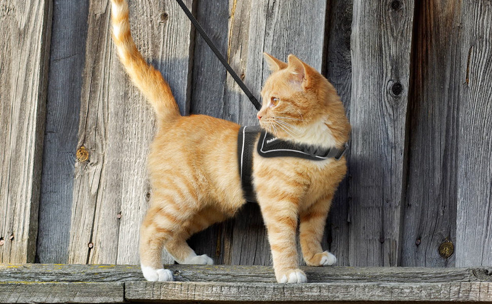 pet harness with leash for small pets