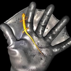 Lizard on Glove