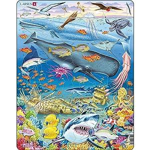 La vie marine dans l'océan Pacifique