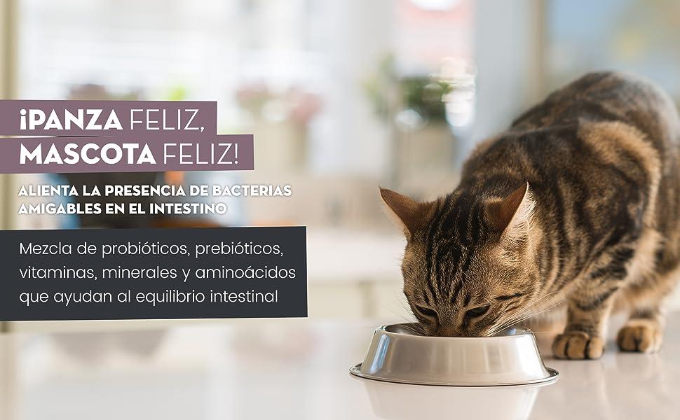 Animigo Digestease Para Gatos | Suplemento Natural para Regular la Flora Intestinal y Mantener Sistema Digestivo | Con Probióticos, Prebióticos, Vitaminas, Minerales, Enzimas y Aminoácidos 60 Cápsulas: Amazon.es: Productos para mascotas