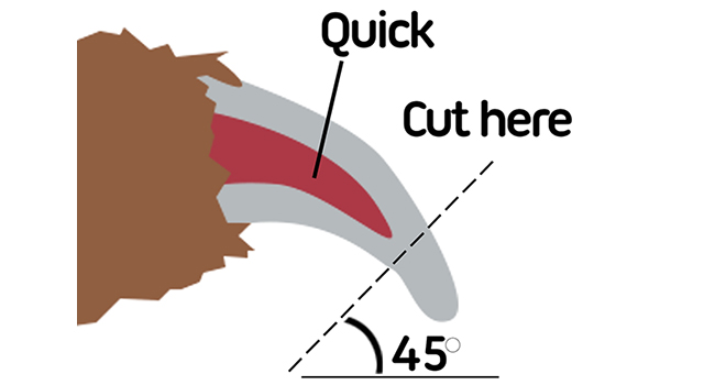 how to cut nails safely