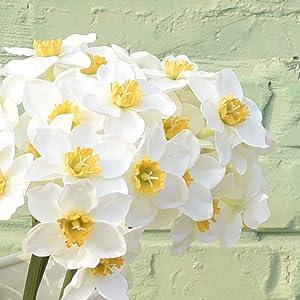 lifelike white daffodils