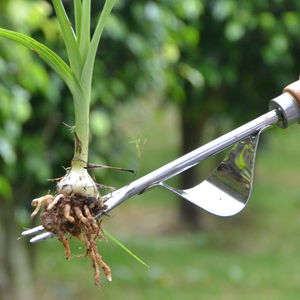 Weeder Tool for Garden Stainless Steel