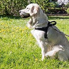 Happilax Arnés Noruego Perro pequeño y Cachorro, Reflectante ...