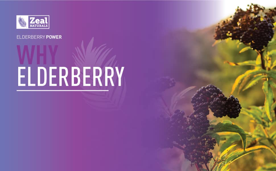 Elderberry gummies elderberry immune support immune booster