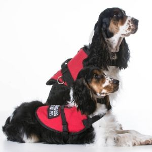 Service dog which provides you with aid