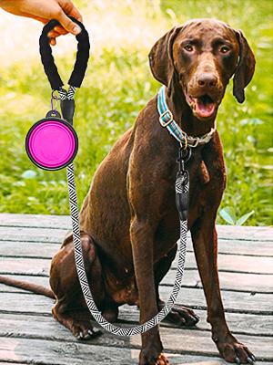 dog leash 6ft