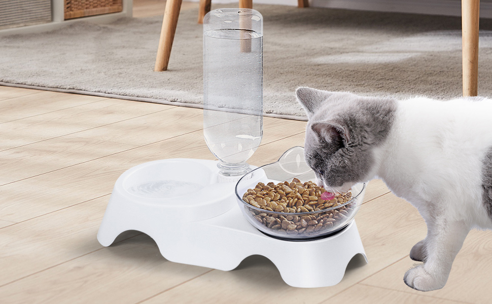 cat food water bowl
