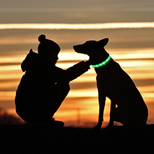 dog collar light