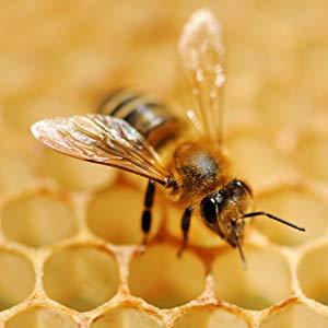 Manuka Honey MGO 820+