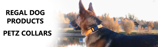 biothane hunter safety blaze gear sporting accessories training bright blue dogcollar huntingdog xs