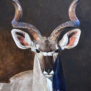 greater kudu web image