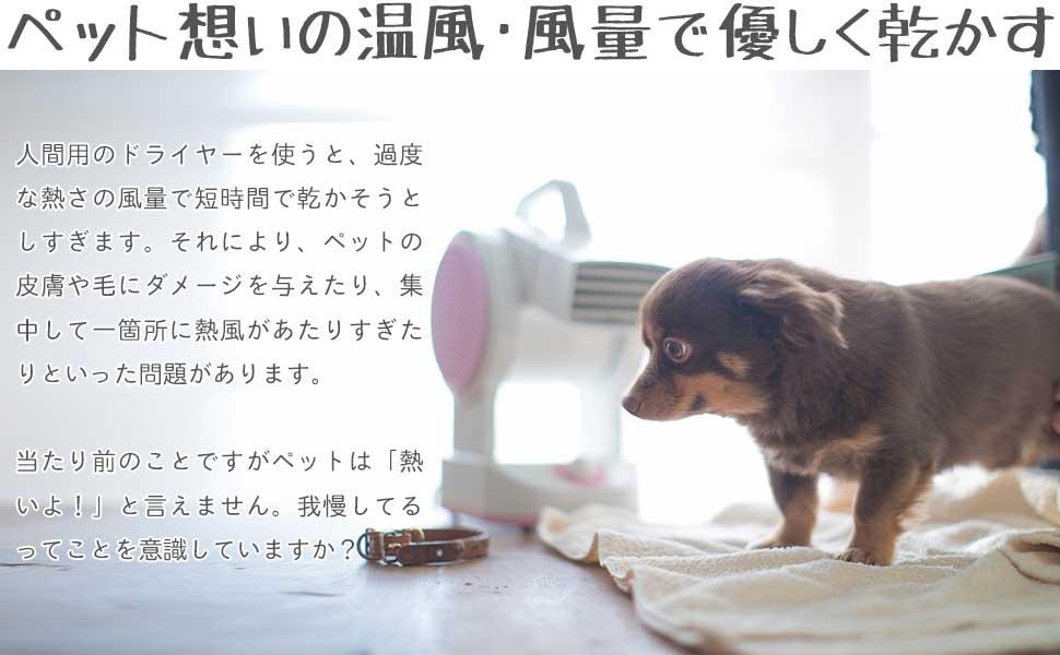ペットに優しいぬるめの温風で乾かします。