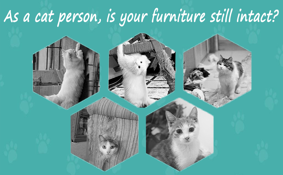 As a cat person, is your furniture still intact?