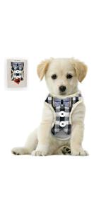 dog tuxedo harness leash sets