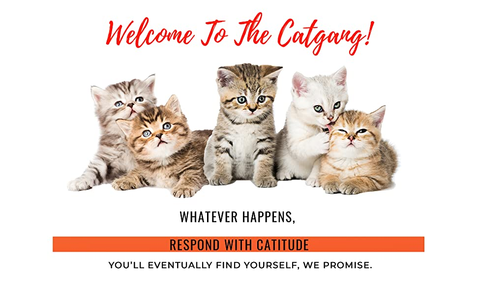 stop cat scratching furniture scratch guard cat furniture protector spray cat anti scratch
