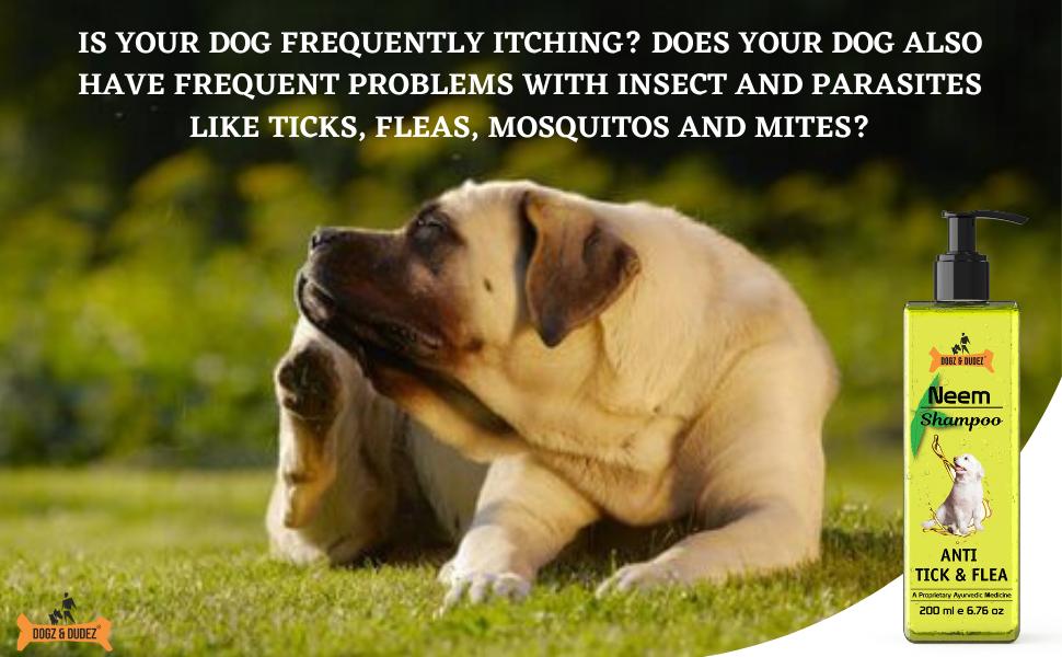 dogz  dudez; Dogs; cats; kitten; puppies; itching; tick spray; anti tick; tick; fleas; tick shampoo