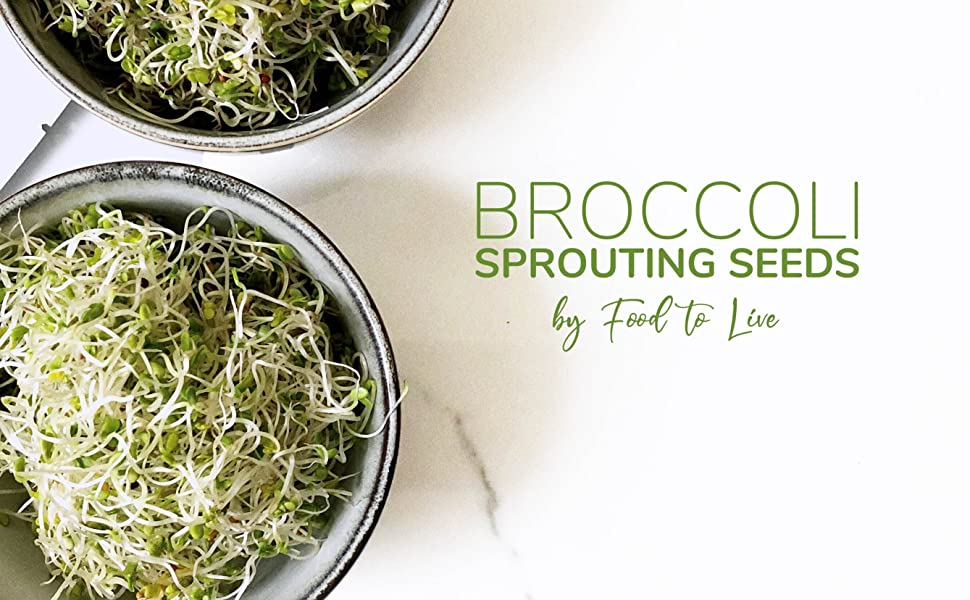 Bulk 4 Ounces Broccoli Seeds for Sprouting Kosher