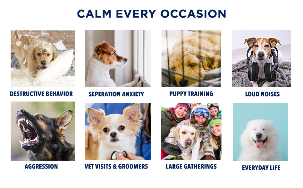 Dog calming supplements separation anxiety, loud noises, aggression, vet visits, daily life, events