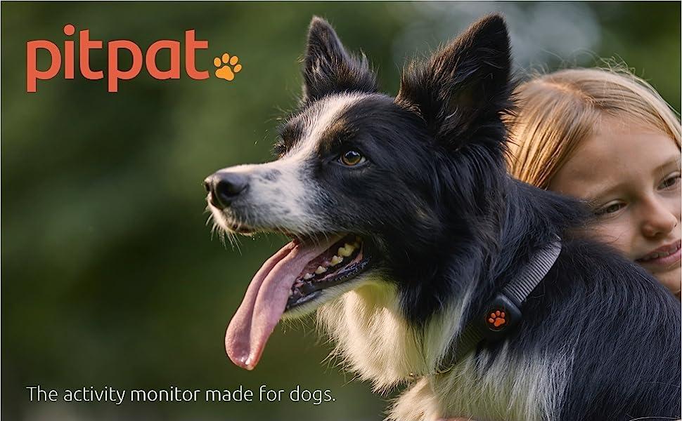 PitPat Dog Activity Monitor A+ Header