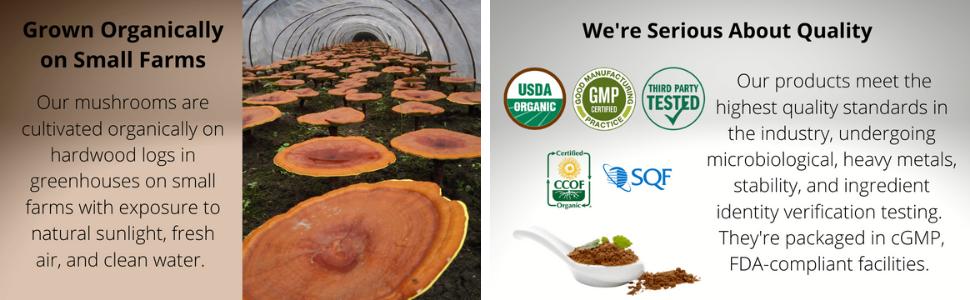 organic mushrooms, mushroom extract, usda organic, fruiting bodies, fruit bodies