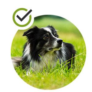 Reduce burn grass spots