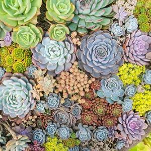 Succulent Soil Cactus Soil