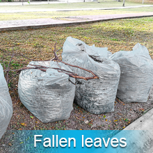 Dealing with fallen leaves