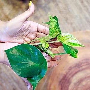 Propagate plants, plant pots, test-tube planter