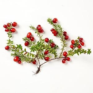Pure Cranberry