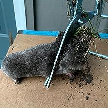 mole traps that work