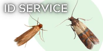 moth balls for wardrobe carpet moth killer acana moth killer insect killer spray