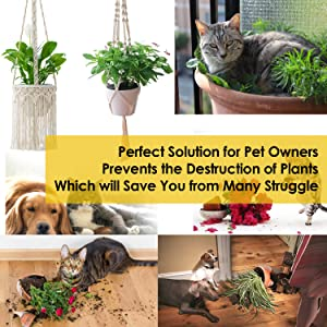 Save your plant pots from animals