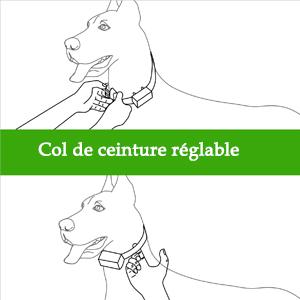 Fixez correctement le collier aux chiens